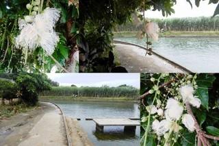 sagaribana-itoman.jpg